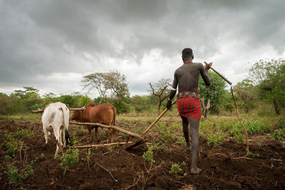 Ethiopia-agro-pastoralist-plow-plough.jpg
