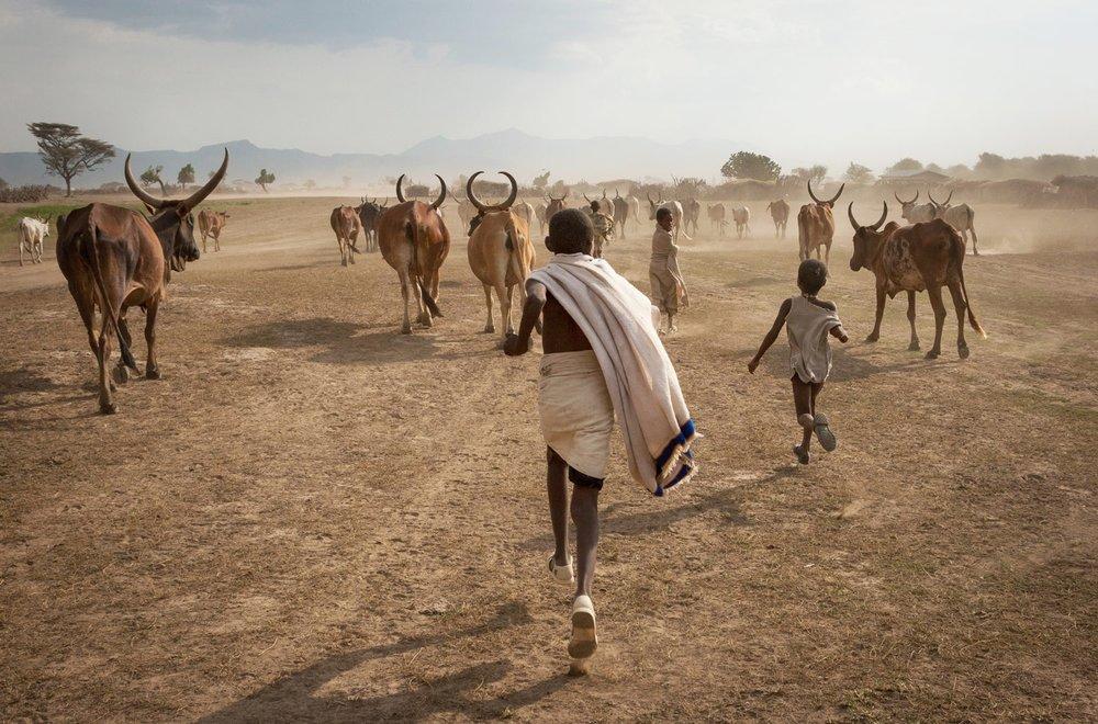 ethiopia-afar-pastoralist-children-cattle.jpg