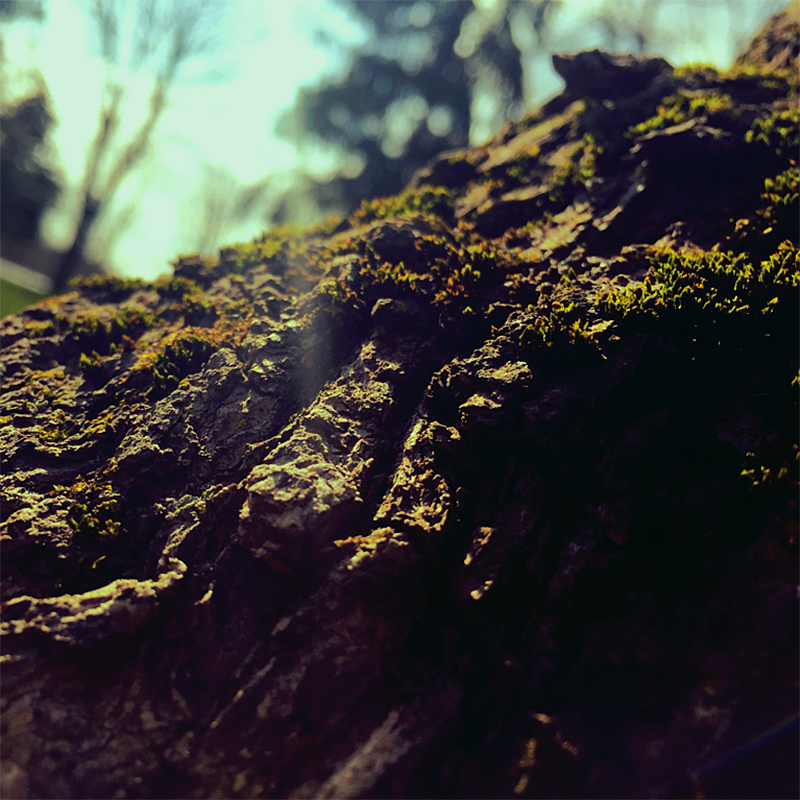 moss_artwork_800x800_no_logo.png