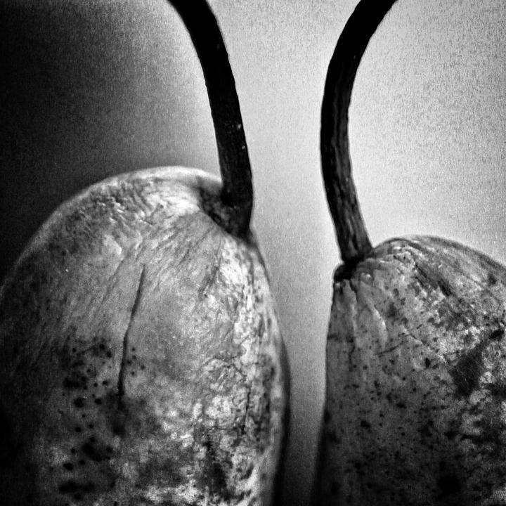 Pears_MG_0246-01.jpg