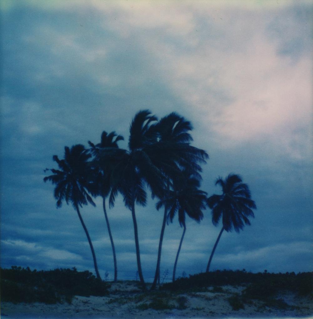6 palmscropped.jpg