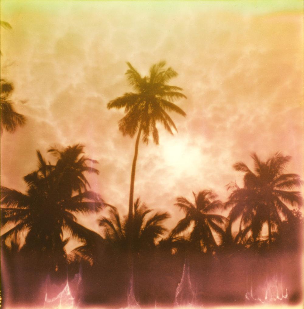 8 palmscropped.jpg