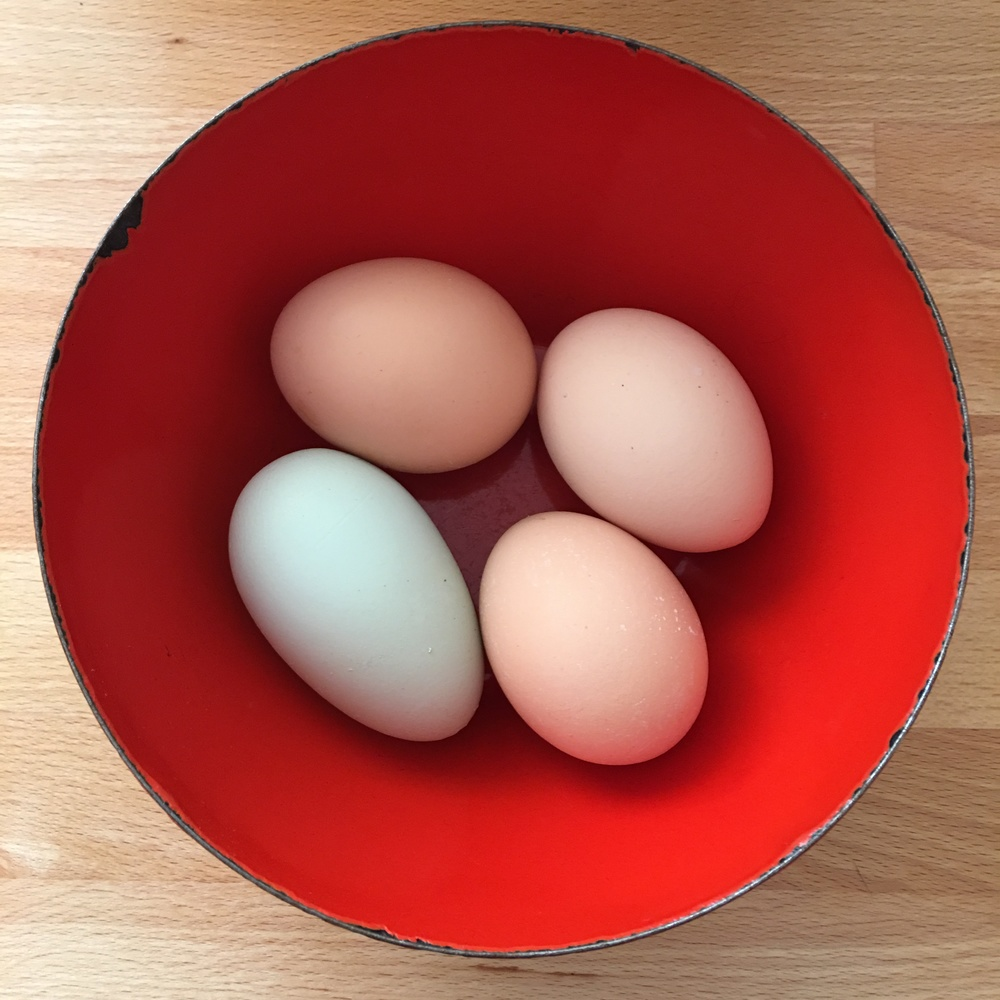 Fresh eggs from our backyard flock in a favorite bowl made for a perfect shot of Spring