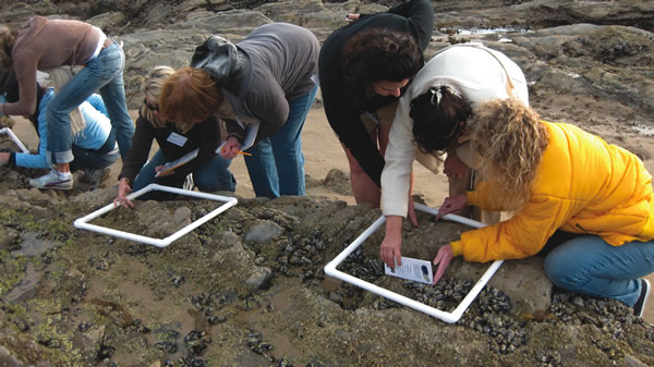 Teachers in a professional development workshop learn about citizen science programs at Crystal Cove's tidepools