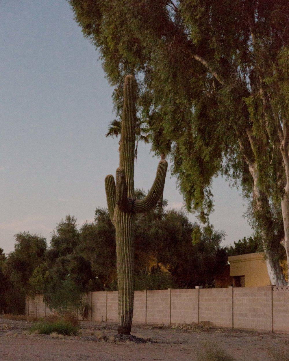Scottsdale-02.jpg