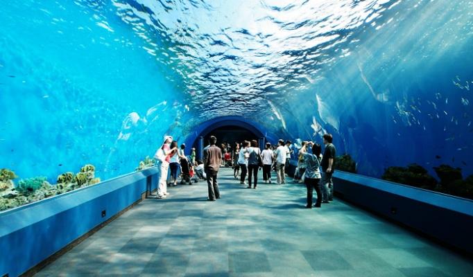 Siam-Ocean-World.jpg