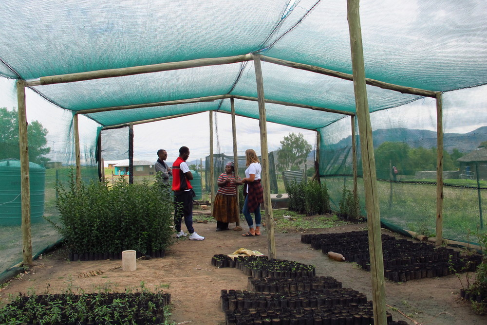 We also stopped by a tree nursery, a project run by Senior Red Cross volunteers. To make the project more sustainable they're working on getting youths involved.