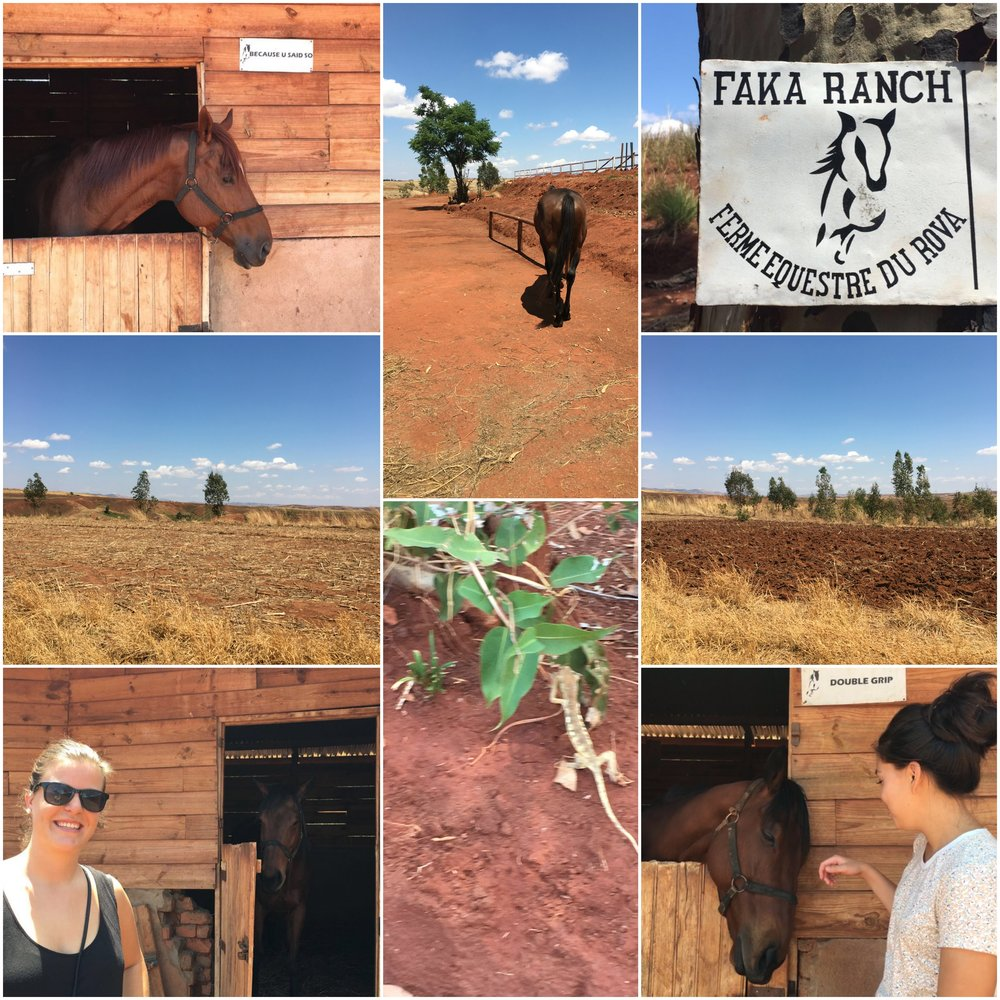 On the way from Tsiroanomandidy to Antananarivo we visited a ranch.