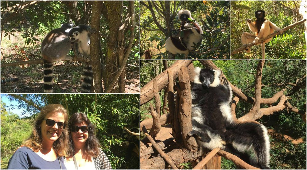 The lemur park outside of Antananarivo