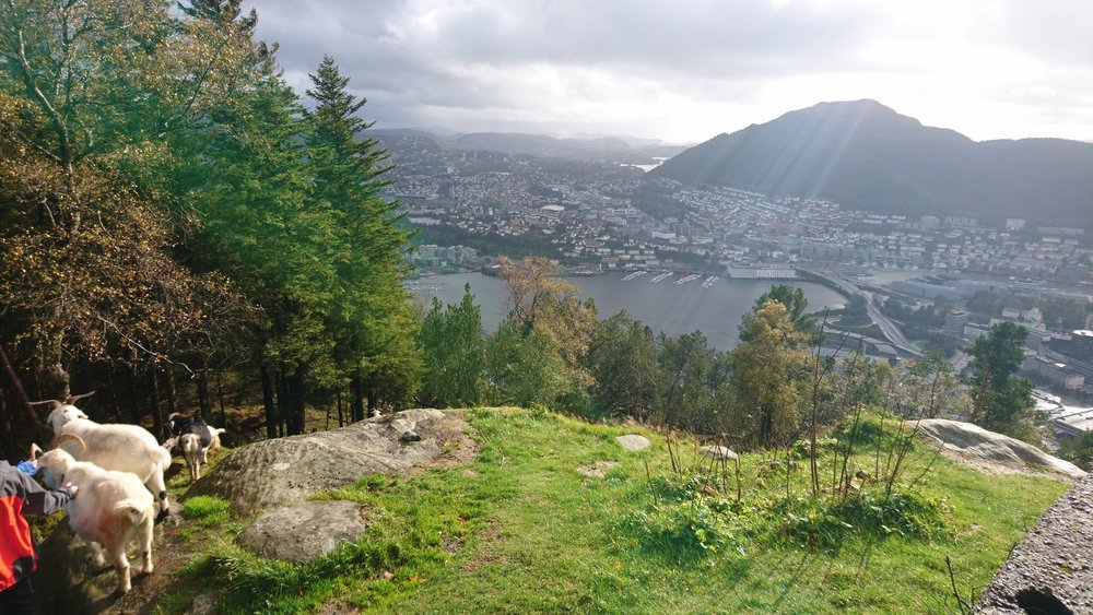 Bergen from the high  Ph: Anna Ortiz