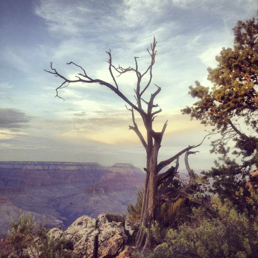 A lone tree in the Grand Canyon was where we suspended The Hanged Man