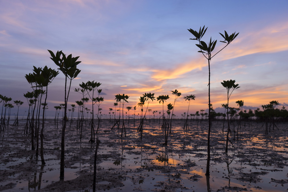 Young mangroves on the beach in Thailand are the background for The Lovers card