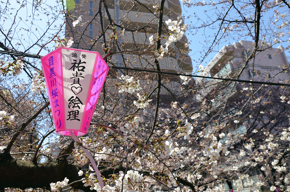 Pink lanterns adorn the Meguro River  in celebration of the Hanami festival (cherry blossom viewing). By day, it's a festive splash of color, by night, a magical blossom-y twinkly wonderland | photo by Shell, Kitty & Buck [click through for more!]