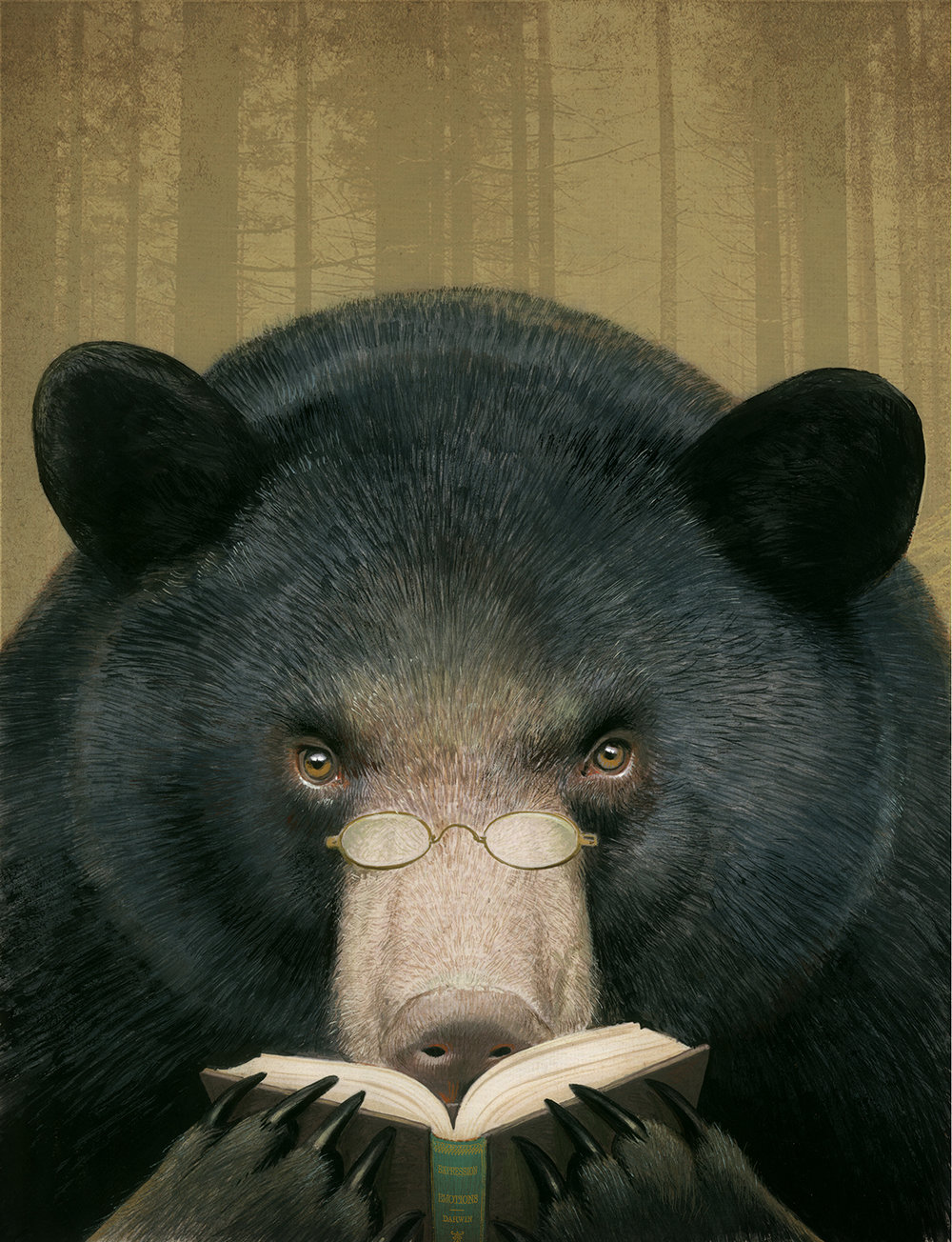"""Reading Bear"" inside full page for Sierra magazine ©Bill Mayer 2019"