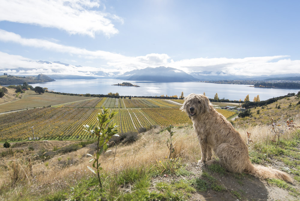 Rippon vineyard, Wanaka