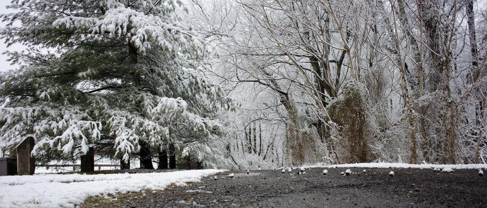 V.A Park Snow