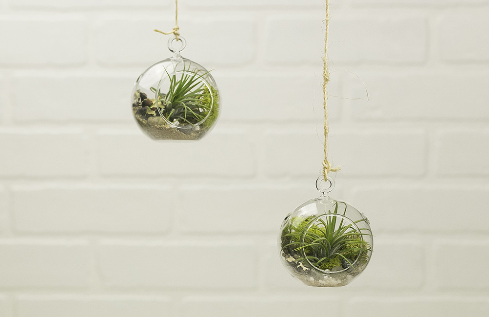 Mini Hanging Air Plant by Makers Kit, $22