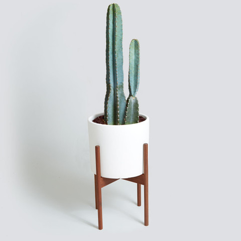 Case Study with Cacti from The Sill, $450