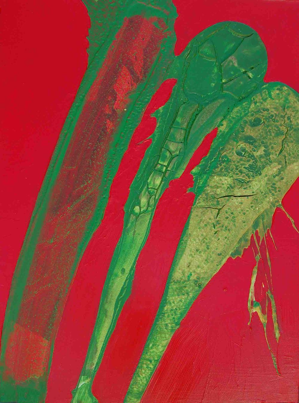 Pachicereus, 2007