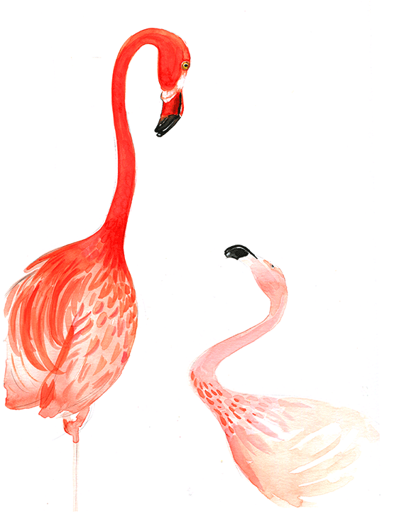 Flamingo illustration by illustrator Rongrong DeVoe