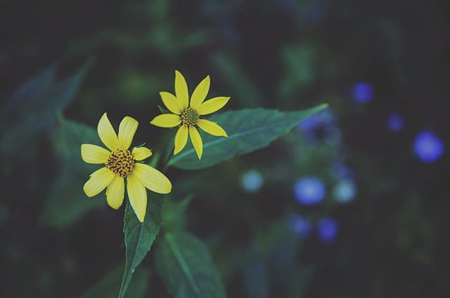 *FLOWERS ARE DIRT STARS* #weareflowerheads #flowers #nature #happyplace #columbusohio #614 #expcols #flowerpower #pickme #love #green