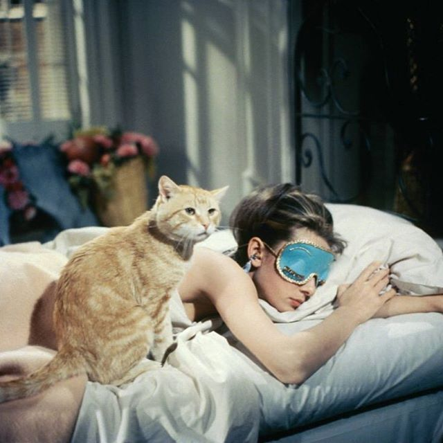 """It may be normal, darling; but I'd rather be natural."" Holly Golightly  HBD Queen.👑🌸💙#audreyhepburn #hollygolightly #trumancapote #tbt #hbd #queen #goodvibesonly #napqueen #catloversclub"