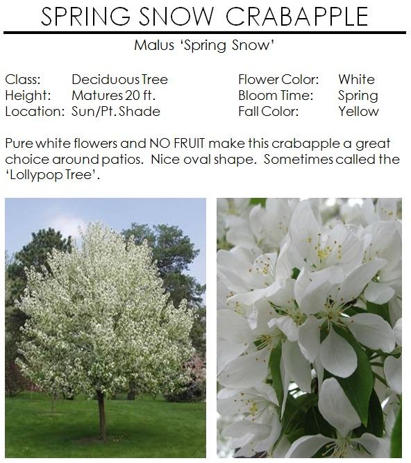 Spring snow crabapple the garden kingdom mightylinksfo