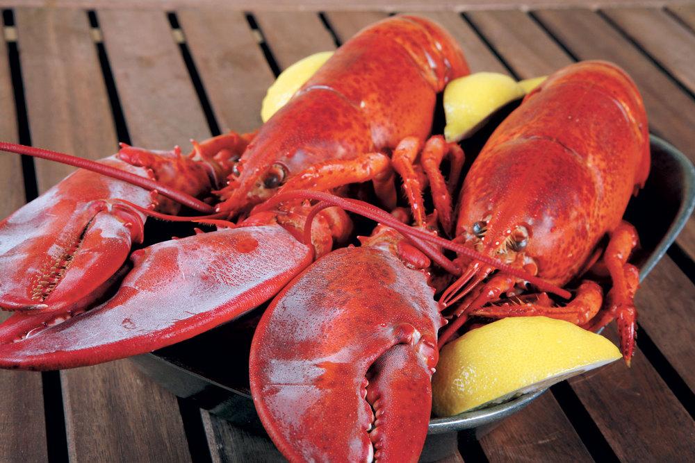 Lobster023.jpg