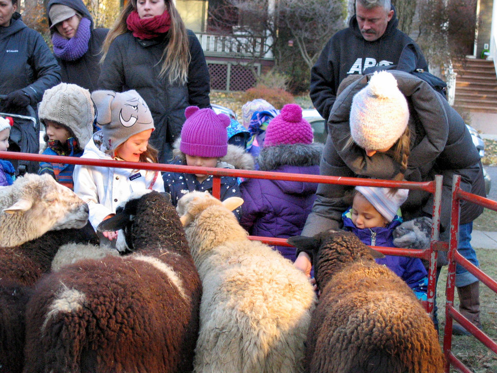 2.0 Day kids meet sheep.JPG