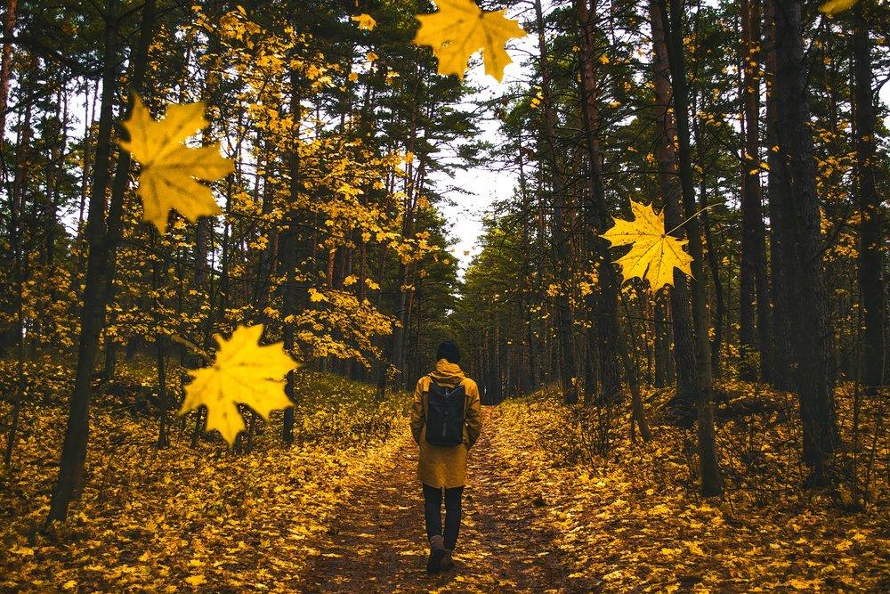 autumn-1804592.jpg