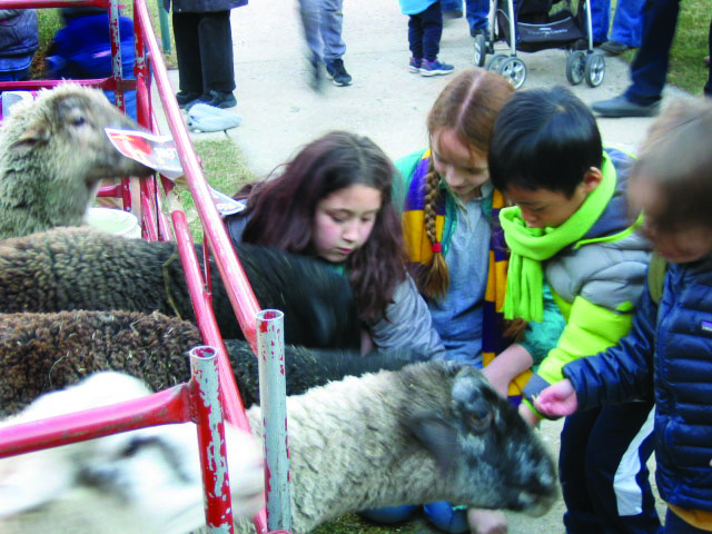 1.50 kids love sheep .JPG