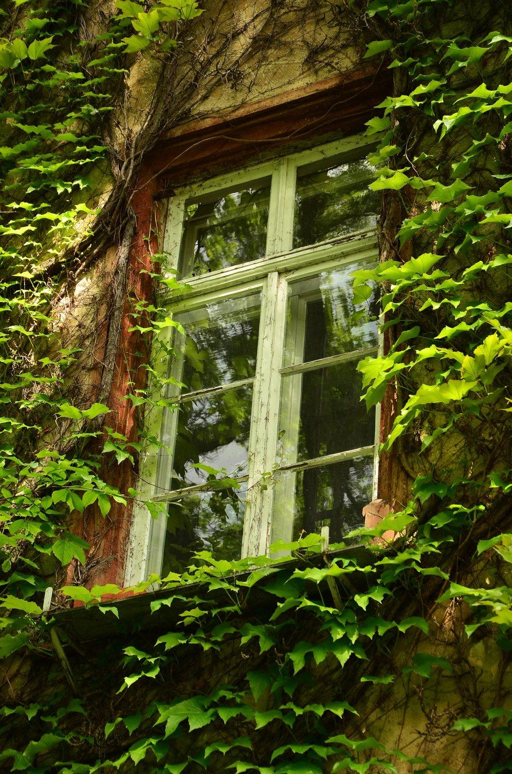 window-1433538.jpg
