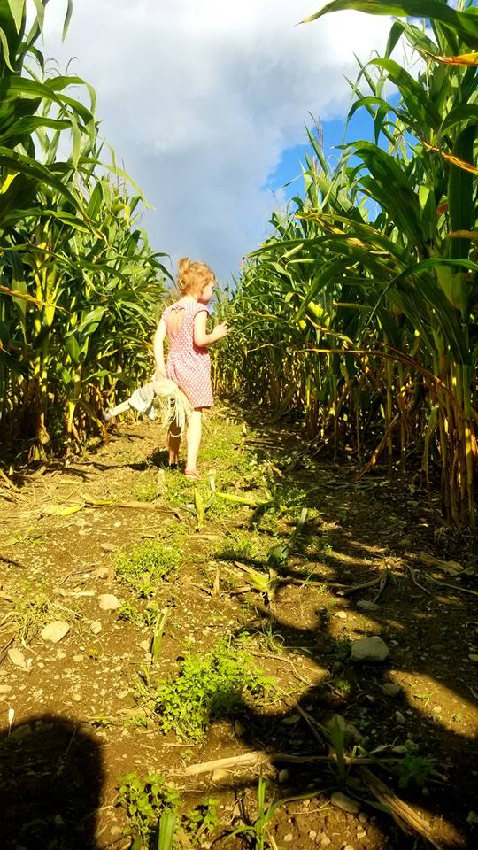 Corn Maze - More details as the start designing this years maze!
