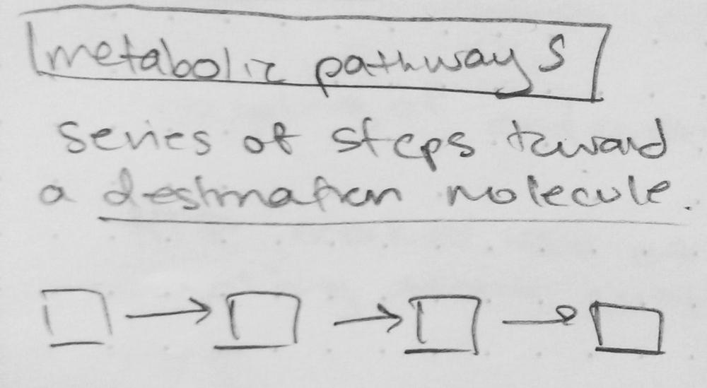 Metabolic Pathways step series.