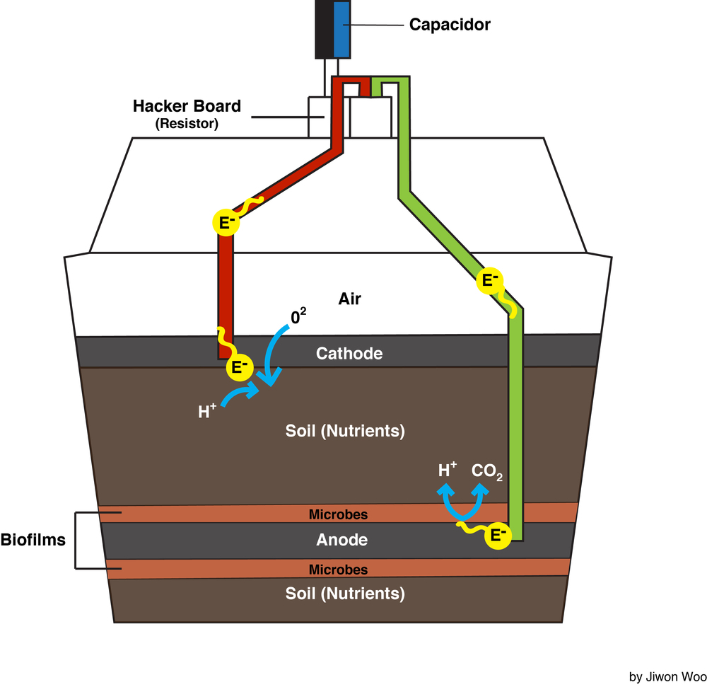 microbial fuel cell A microbial fuel cell (mfc) or biological fuel cell is a bio-electrochemical system that drives a current by mimicking bacterial interactions found in nature mediator-less mfcs are a more recent.