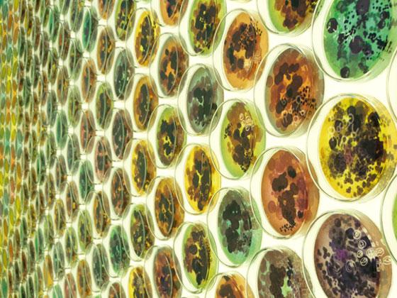 Bio Tiles