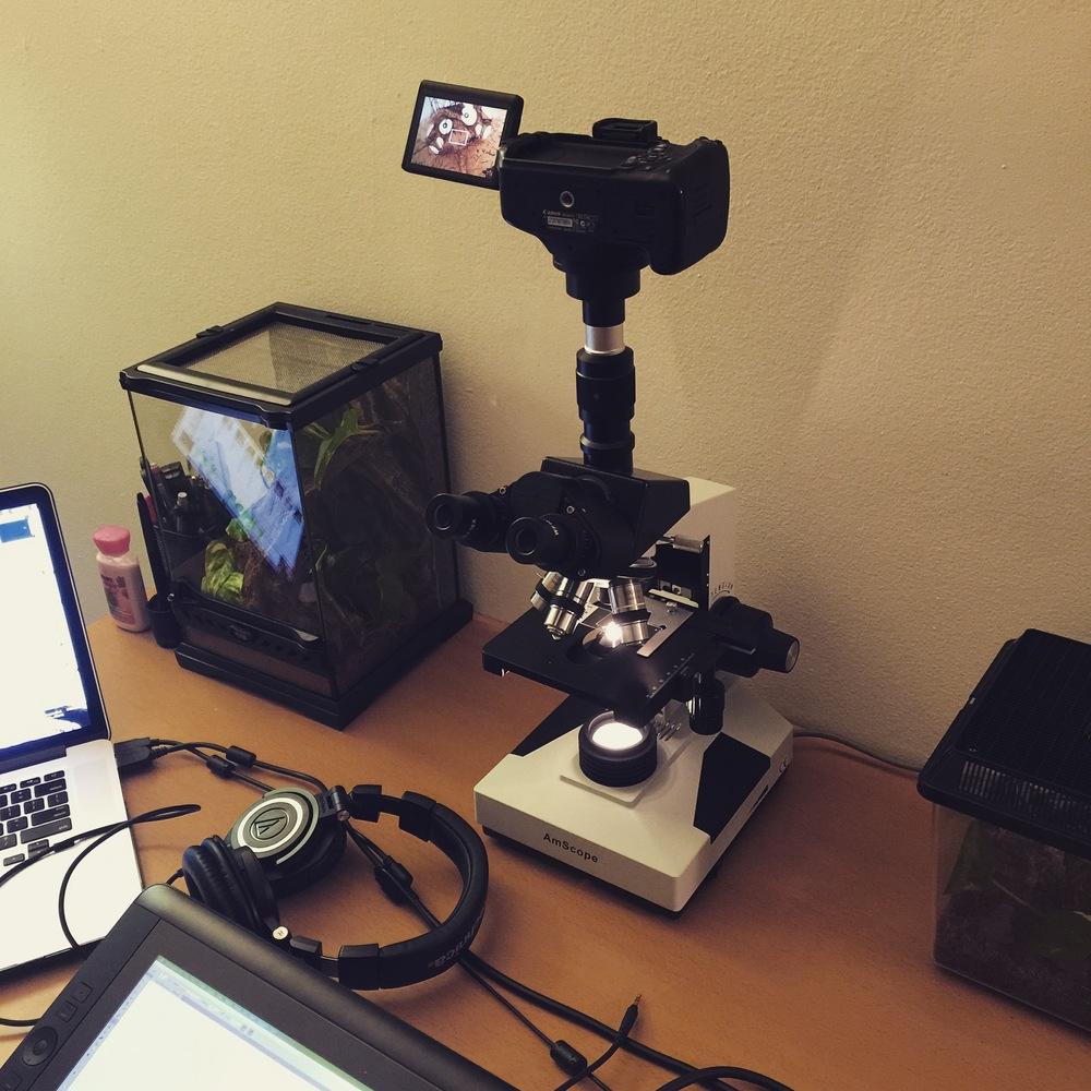 2015-10-01-microscopesetup