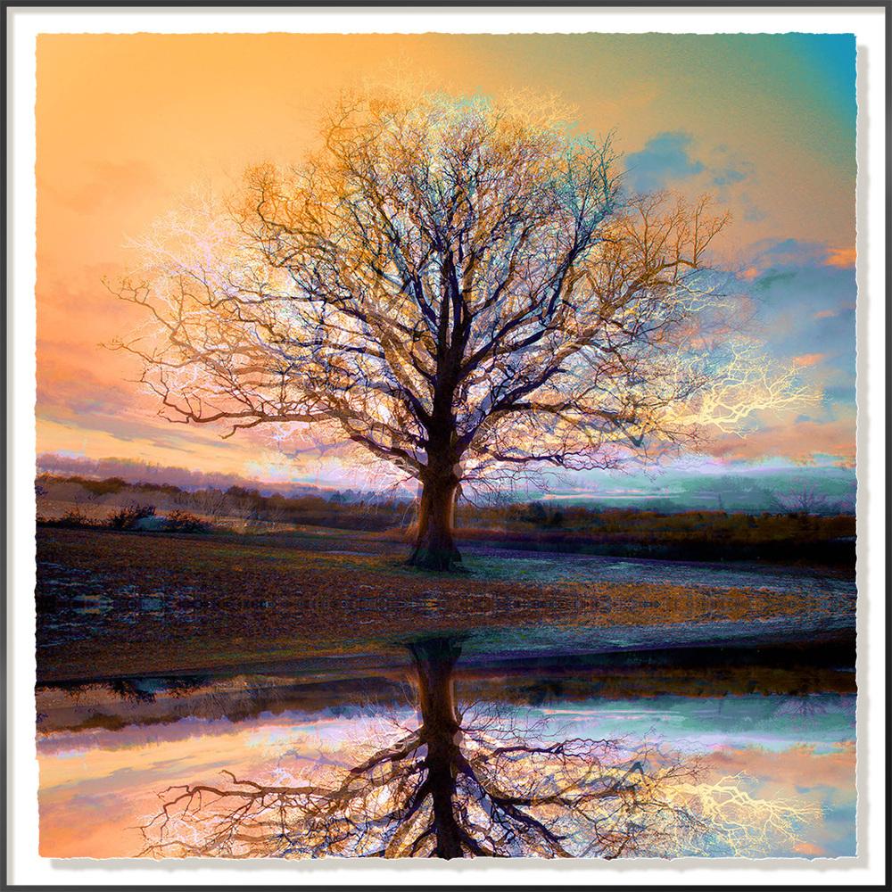 Symmetree-3 8 Reflected - 40 x 40cm