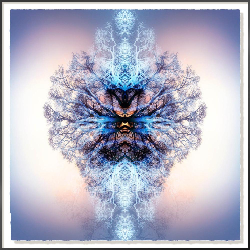 Symmetree I - SOLD
