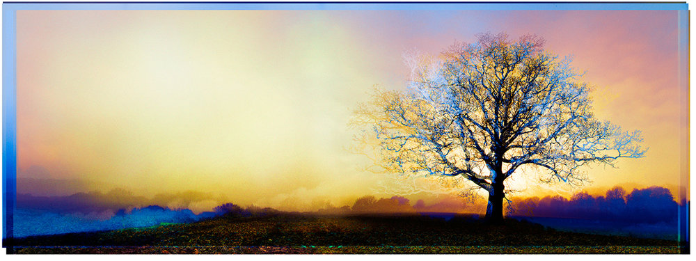 Symmetree – Rising Sun in Gold and Purple - SOLD