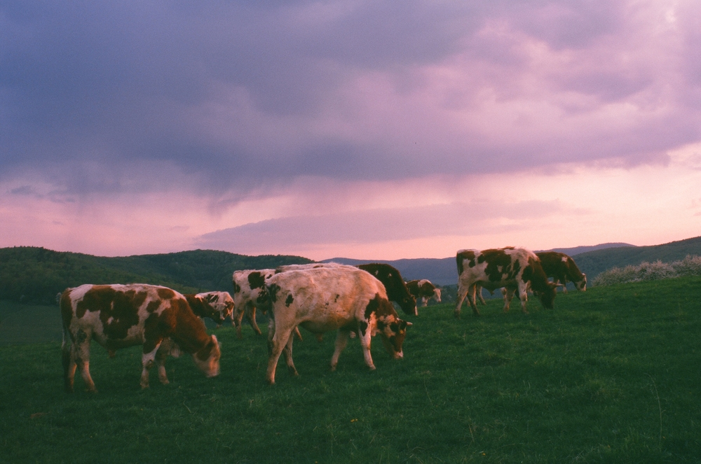 kravy.JPG