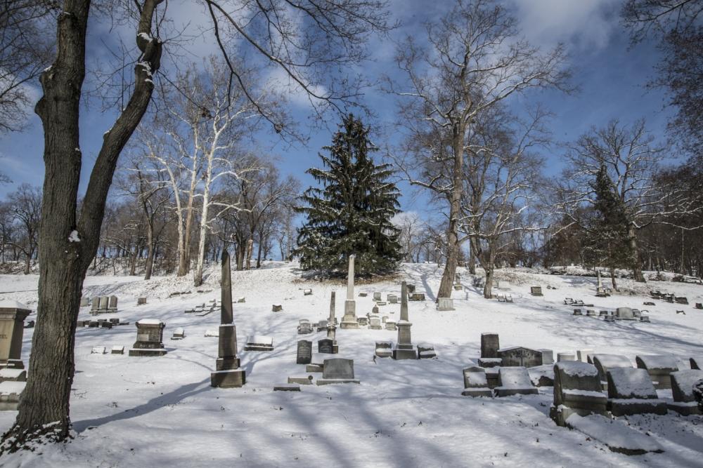 Conifer, Allegheny Cemetery