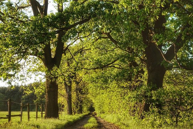 #thebestcameraistheoneyouhavewithyou #outdoorphotography #naturephotography #roadsidephotography #brandenburg #elbeelster #germany