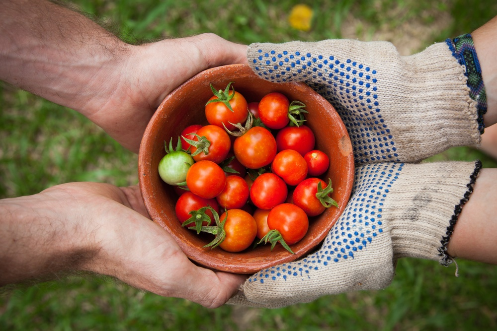 Whether you're sharing tomatoes or sharing free stock images, it's always a good idea to indicate where the item came from. (Photo by Elaine Casap)