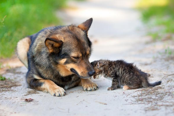 Fix It Harris County dogs.jpg