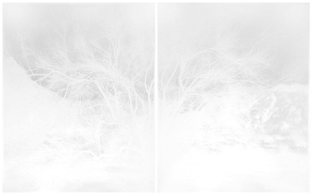 scott b. davis  palo verde, chocolate mountains, california, 2016 unique paper negative palladium prints, diptych 20 x 32 inches (each 20 x 16 inches)