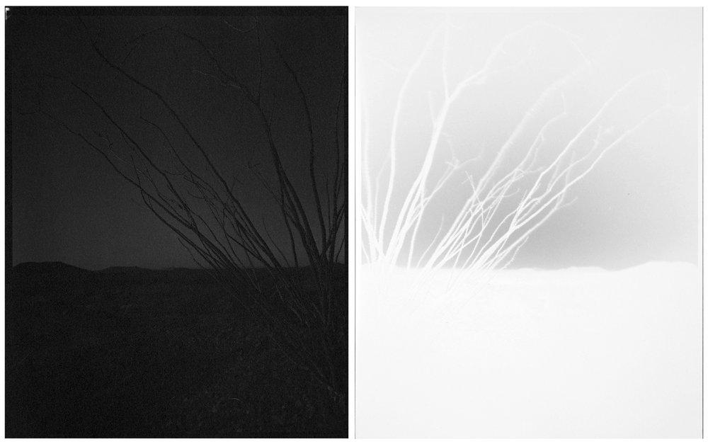 scott b. davis  ocotillo, ocotillo (no. 44), 2015 unique platinum/palladium paper negative prints, diptych 10 x 16 inches (each 10 x 8 inches)