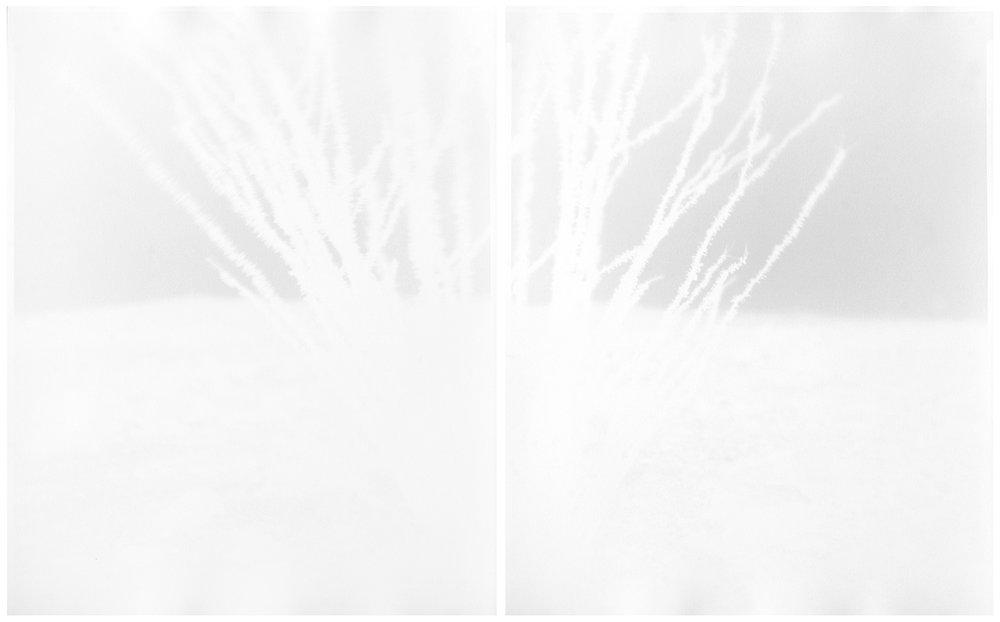 scott b. davis  ocotillo, near ocotillo california (no.2), 2015 unique paper negative palladium prints, diptych 20 x 32 inches (each 20 x 16 inches)