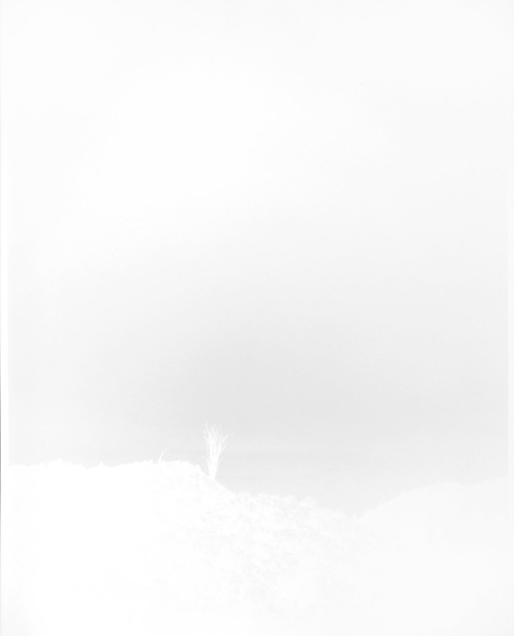 scott b. davis  ocotillo, ocotillo (no. 4), 2015 unique paper negative palladium print 20 x 16 inches