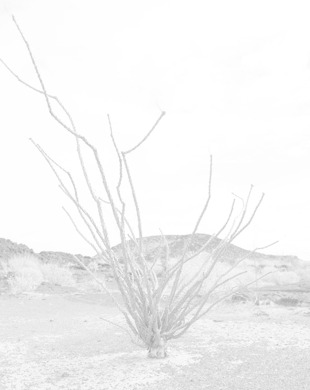 scott b. davis  ocotillo, ocotillo (no. 11), 2015/2016 palladium print 20 x 16 inches edition 1/5